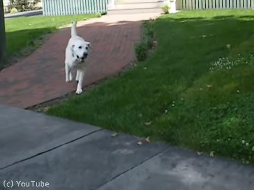 郵便受け取りをしてくれる犬05