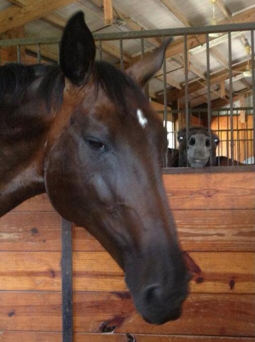 馬には2タイプある01
