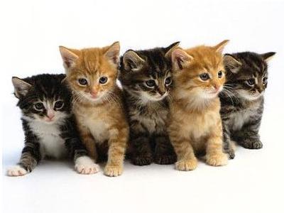 ハイっ猫ちゃんたち、みんな同時に踊ります