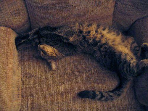 ビデオチャットで猫が自分を認識してくれた00