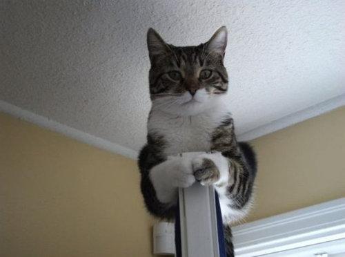 ボス猫01