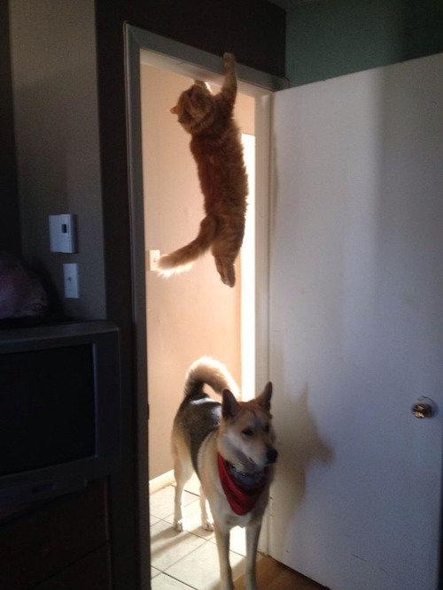 猫を探す犬01