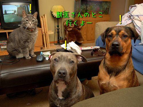 犬や猫を獣医に連れて行くと00
