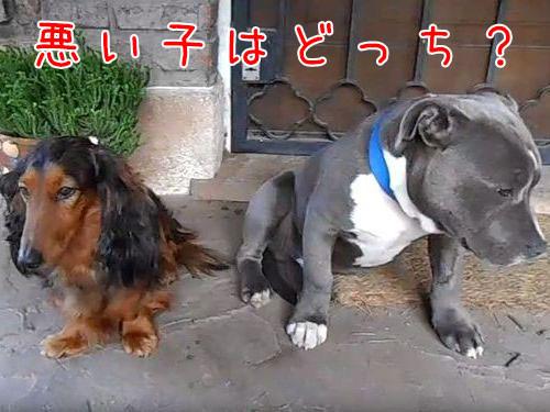「悪い犬はどっち?」00