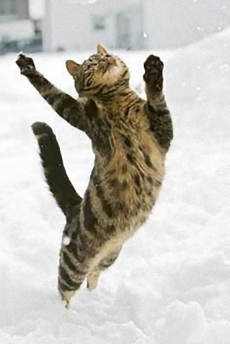 雪なんてへっちゃらな猫05