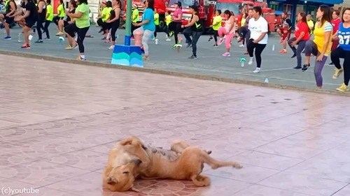 この犬、人間と一緒に踊ってる…02