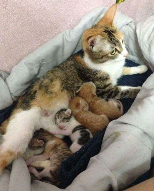 家族愛の強いパパ猫03