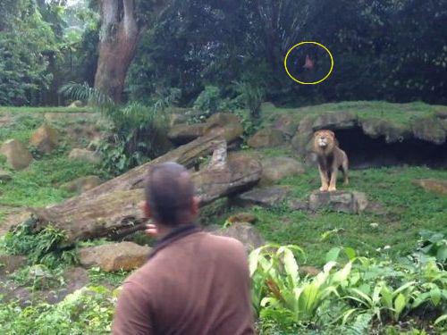 ナイスキャッチするライオン01