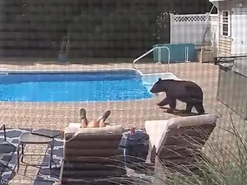 プールサイドで寝てたらクマが足を突っついてきた01
