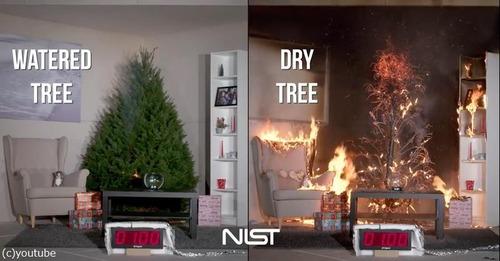 クリスマスツリーの扱い方法に注意04