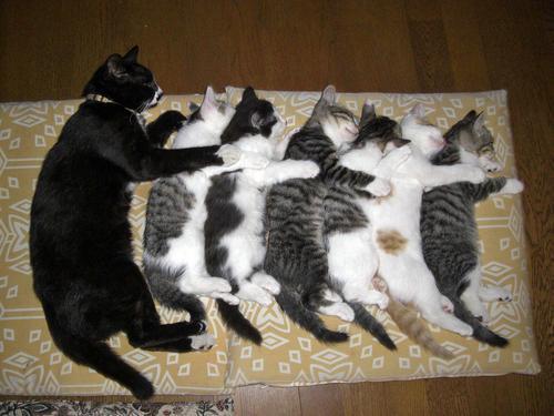 猫の寝方27