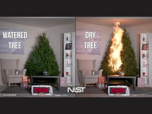 クリスマスツリーの扱い方法に注意00
