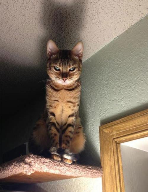 演技力の高い猫たち09