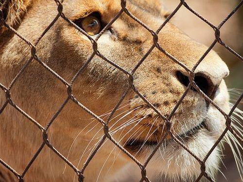 野生の動物を見るときはこうあるべきだよね00