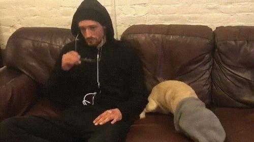 悪い犬と飼い主02