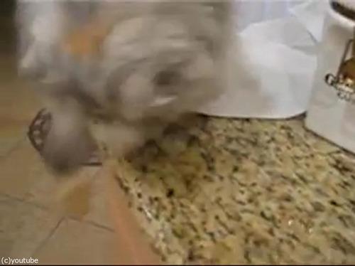 猫が犬のためにエサを取ってあげる02