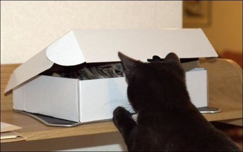 箱に入る猫01