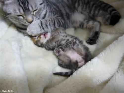 夢見る子猫をぎゅーっと抱きしめるママ猫04