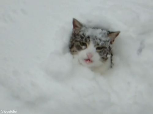 雪遊びが大好きな猫03