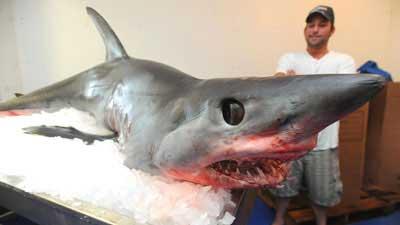 船にサメ01