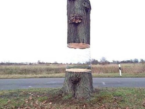 大木を宙に浮かべる方法03