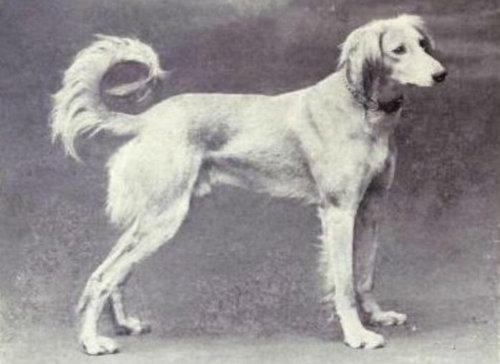犬種は100年でこう変わった01