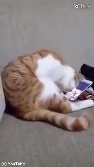 今は亡き飼い主さんの動画を見た猫がとった行動02