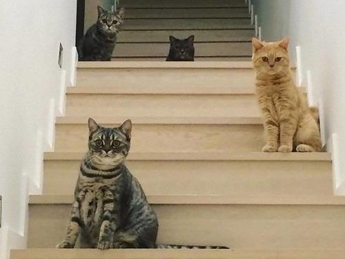 他の猫のエサを食べるデブ猫対策01