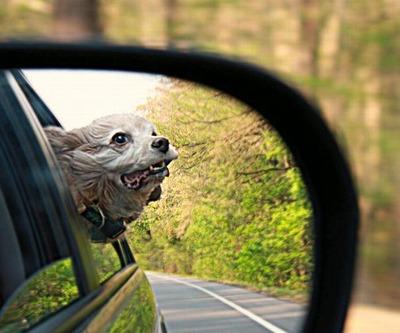 車の風と犬02