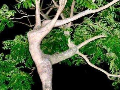 世界の奇妙な木TOP