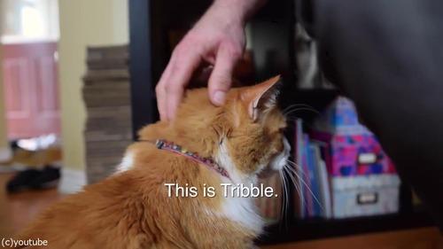 ソプラノボイスな猫のゴロゴロ02