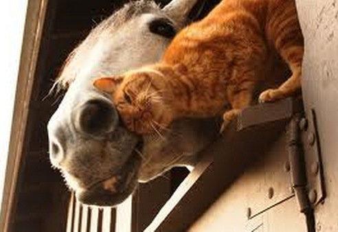 他の動物と仲良くする猫08