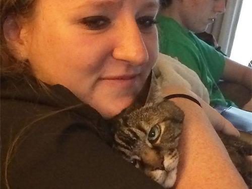 自撮りに付き合わされる猫10
