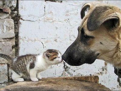 サウジアラビアで犬・猫が禁止になった理由