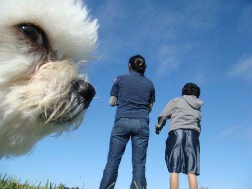 犬を巨大化する写真テクニック11