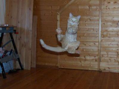猫ジャンプ16
