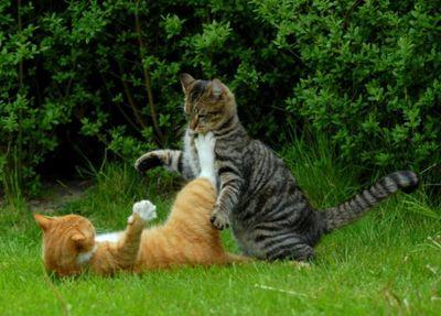 壮絶なる2匹の猫14