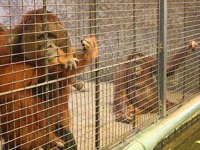 タイの動物園00