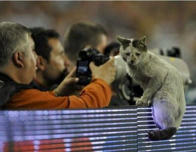 サッカー大好き猫02