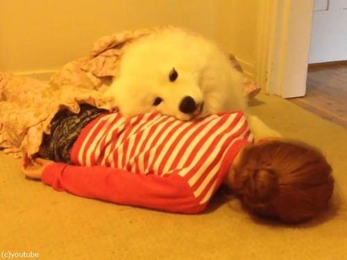 女の子とサモエドの子犬02