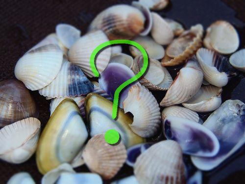 貝殻のランプ00