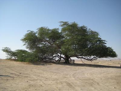 命の木02