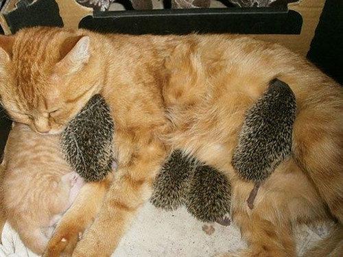 猫とハリネズミの赤ちゃん03