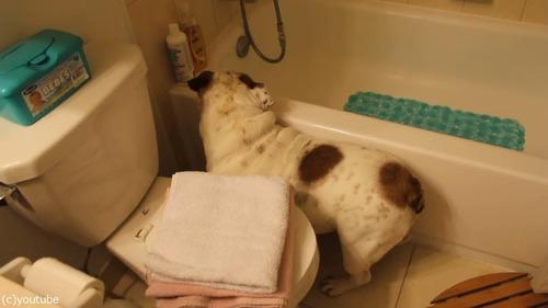 風呂嫌いの犬をおとなしく連れて行く方法05
