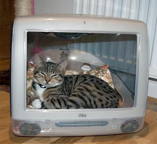 iMacと猫01