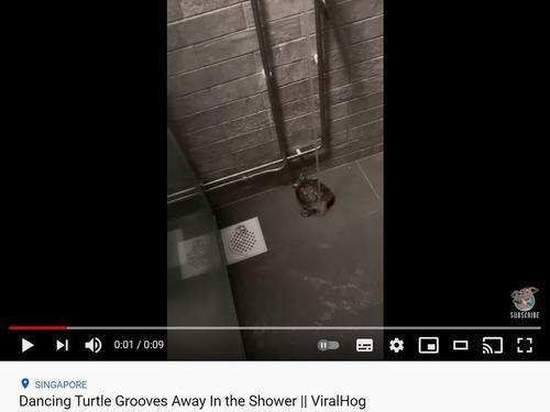 シャワーを浴びながら踊る亀