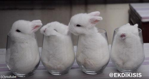 ガラスのコップとウサギ4匹01