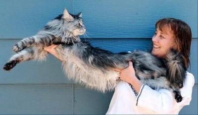世界一長い猫01