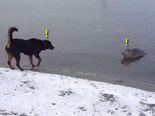 犬とアザラシ