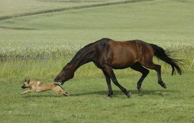馬と犬03